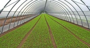 قیمت هر کیلو پروفیل و لوله آلومینیوم مخصوص گلخانه
